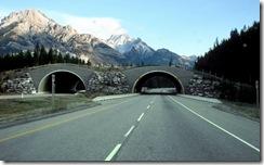 wildlife_overpass